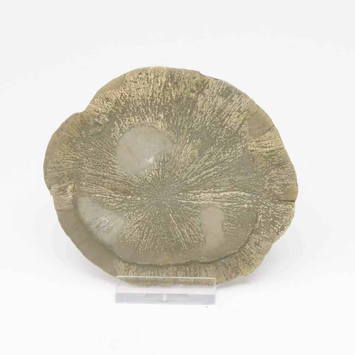 Pyrite soleil ou pyrite dollar