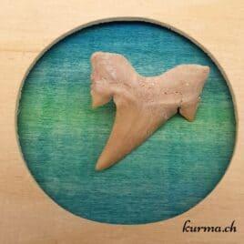 dent-de-requin-3gr