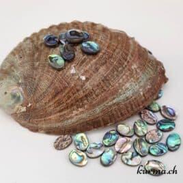 Paua ou Abalone – Perles 10x14mm ovale plate – N°9201
