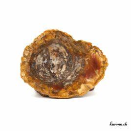 Bois fossilisé – 206gr – N°5511.1